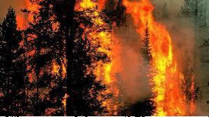 Stingerea incendiilor la păduri
